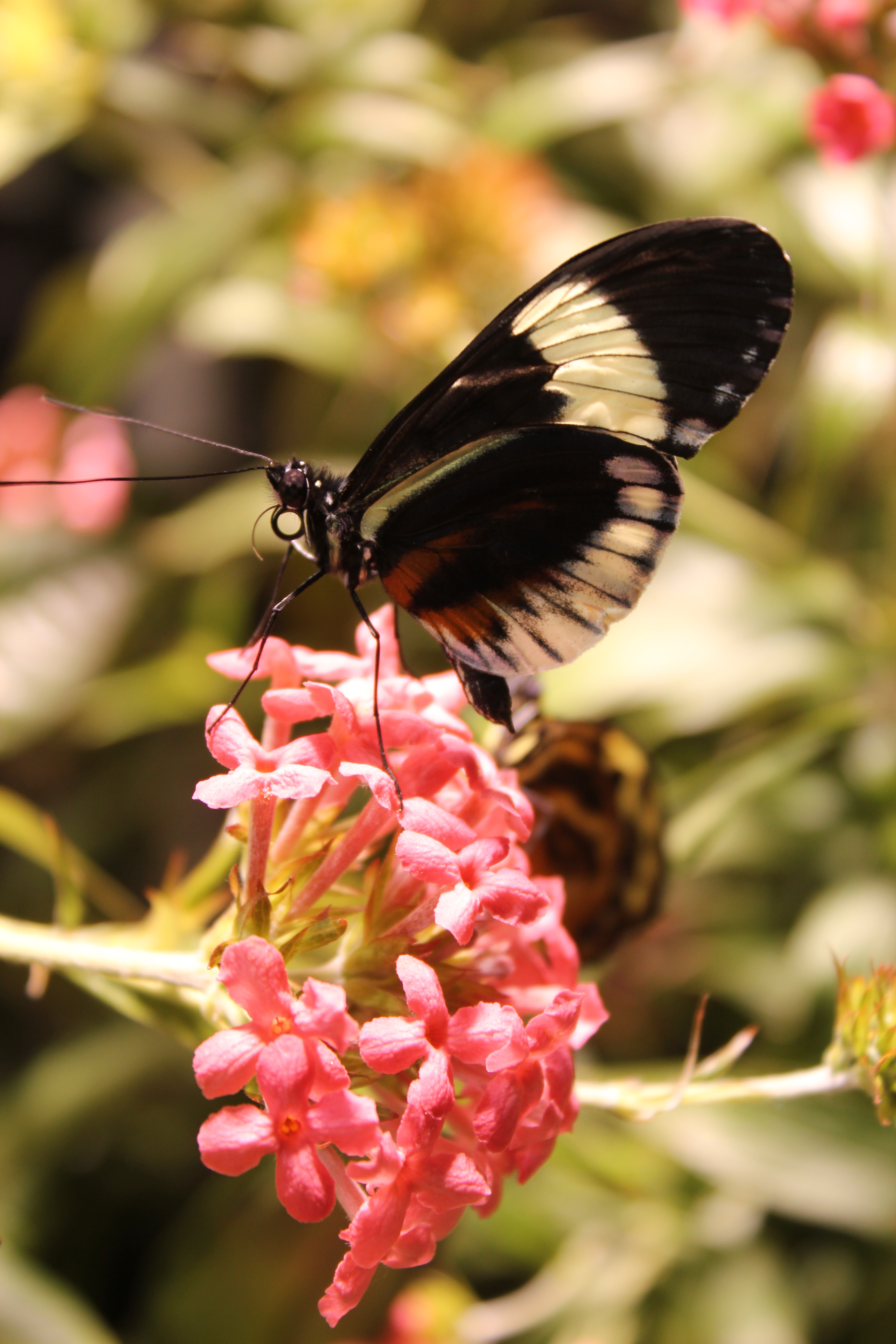 ... The National Museum Of Natural History: Smithsonian Butterfly Garden